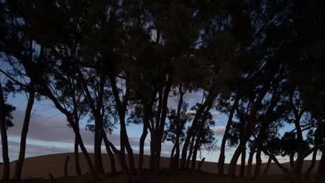 Tree-Desert-00
