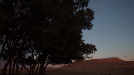 Tree-Desert-01