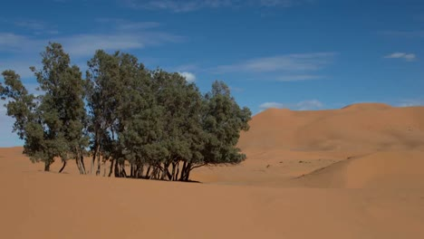 Tree-Desert-02