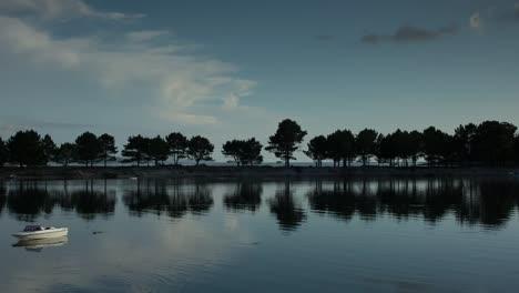 Tree-Dune-04