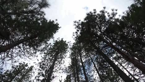 Tree-Spin-00