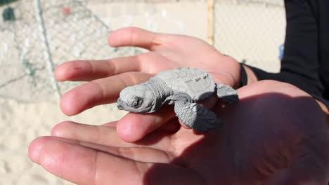 Turtle-00