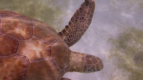 Turtle-04