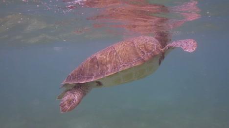 Turtle-05