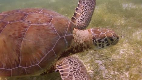 Turtle-06