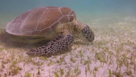 Turtle-07
