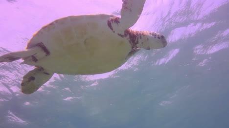 Turtle-08