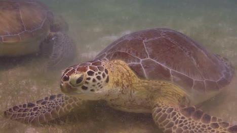 Turtle-12
