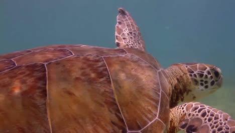 Turtle-14