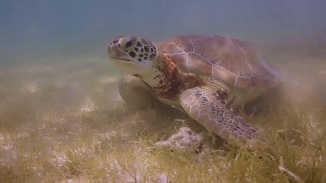 Turtle-15