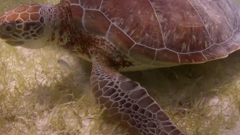 Turtle-24