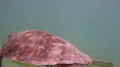 Turtle-25