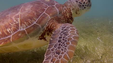Turtle-26