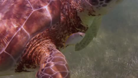 Turtle-27