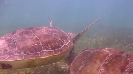 Turtle-29