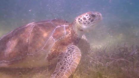 Turtle-57