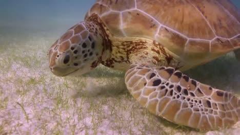 Turtle-64