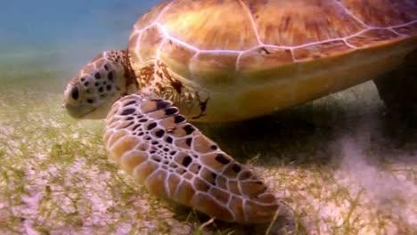 Turtle-67