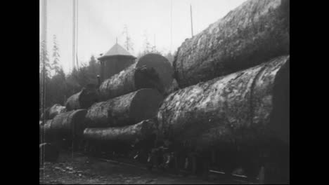 Forests-Are-Logged-And-Trees-Are-Felled-In-1917-1