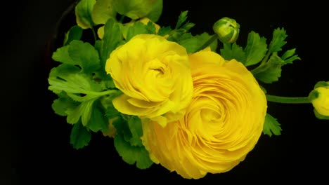 Yellow-Flower0