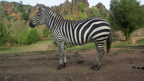 Zebra-00