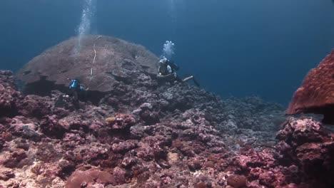 Imágenes-Submarinas-De-Corales-Y-Vida-Marina-En-El-Océano-Pacífico-De-La-Década-De-2010