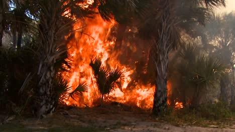 Firefighters-Perform-A-Prescribed-Burn-At-Merritt-Island-National-Wildlife-Reserve-2011