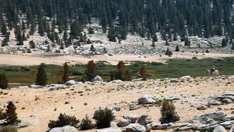 Horse-Rider-Strolls-Through-Inyo-National-Forest-In-California-March-2016