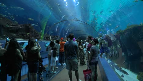 Visitors-walk-in-an-underwater-tunnel-at-an-aquarium
