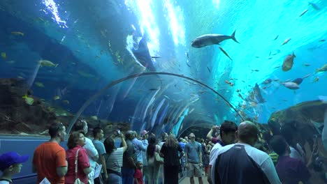 Visitors-walk-in-an-underwater-tunnel-at-an-aquarium-1