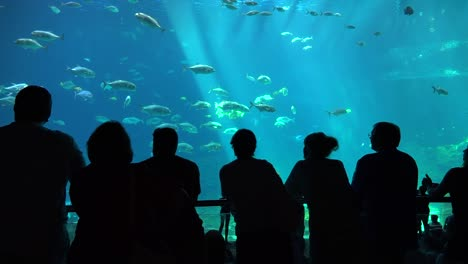Visitors-are-silhouetted-against-a-huge-underwater-tank-filled-with-fish-sharks-and-manta-rays-at-an-aquarium-