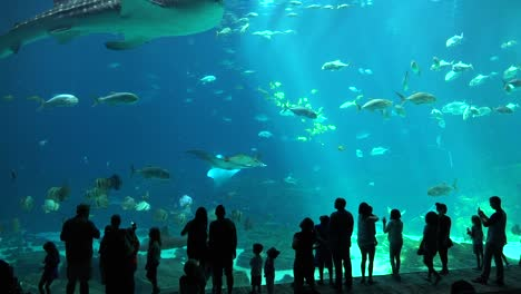 Visitors-are-silhouetted-against-a-huge-underwater-tank-filled-with-fish-sharks-and-manta-rays-at-an-aquarium-1