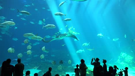 Visitors-are-silhouetted-against-a-huge-underwater-tank-filled-with-fish-sharks-and-manta-rays-at-an-aquarium-2