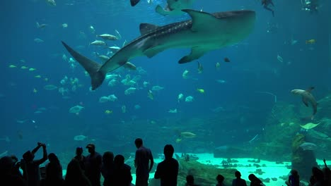 Visitors-are-silhouetted-against-a-huge-underwater-tank-filled-with-fish-sharks-and-manta-rays-at-an-aquarium-3
