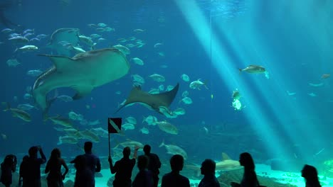 Visitors-are-silhouetted-against-a-huge-underwater-tank-filled-with-fish-sharks-and-manta-rays-at-an-aquarium-4