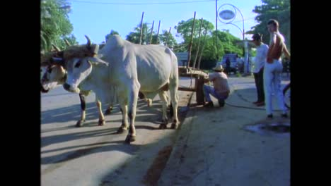 Agriculture-and-farming-in-Cuba-during-the-1980s