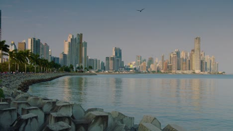 A-seagull-flies-past-the-Panama-City-Panama-skyline