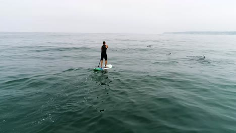 Aerial-Over-Dolphins-Swimming-With-A-Paddleboarder-In-The-Ocean-Near-Malibu-California-3