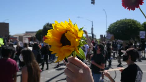 Extreme-Slo-Mo-Protesters-Holding-Up-A-Flower-Sunflower-During-A-Black-Lives-Matter-Blm-Parade-In-Ventura-California