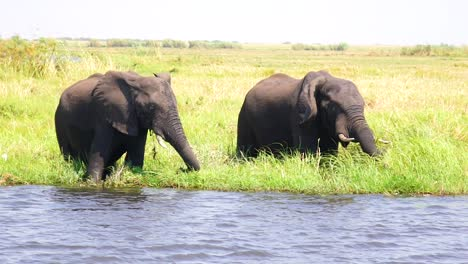 Elephants-Drink-In-Slow-Motion-From-The-Kwando-River-On-The-Caprivi-Strip-In-Namibia-2