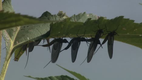 A-Caterpillar-And-A-Dragonfly-And-Mayflies-And-A-Bumblebee-Are-Shown-As-Well-As-A-Lake-And-A-Stream-In-A-Wilderness-In-North-America