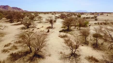 Buena-Antena-De-Un-Avestruz-Corriendo-En-El-Desierto-De-Namib-Namibia