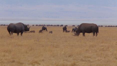 Two-black-rhinos-stand-on-the-plains-of-the-Serengeti-Tanzania-Africa-on-safari