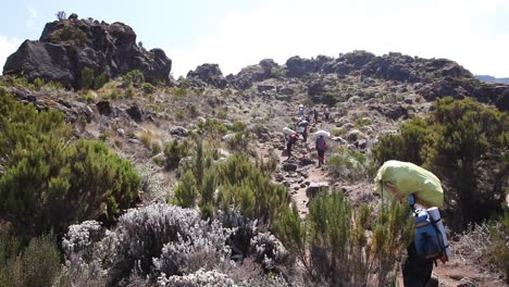 Hikers-and-trekkers-walk-on-the-trail-to-the-summit-to-Mt-Kilimanjaro-Tanzania-Africa