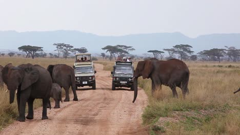 Elephants-migrate-across-the-plains-of-the-Serengeti-Tanzania-Africa-with-safari-vehicles-foreground
