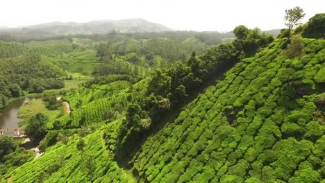 An-aerial-view-shows-an-expansive-tea-plantation-in-Kerala-India-1