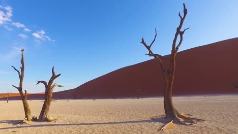 Moving-shot-through-the-Sossusvlei-dead-trees-and-sand-dunes-in-Namibia-Africa-3