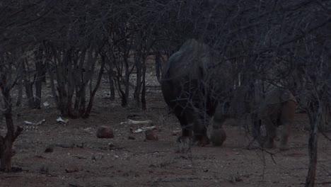 Seltenes-Spitzmaulnashorn-Und-Baby-Gehen-Durch-Den-Busch-In-Namibia-1