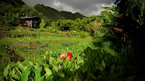 Tiro-Ascendente-De-Trabajadores-En-Un-Campo-En-Una-Isla-Tropical