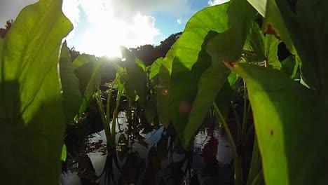 POV-shot-through-green-plants